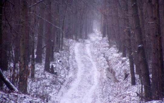 Прокуратура Киевщины в декабре истребовала в пользу государства 5 гектар Беличанского леса