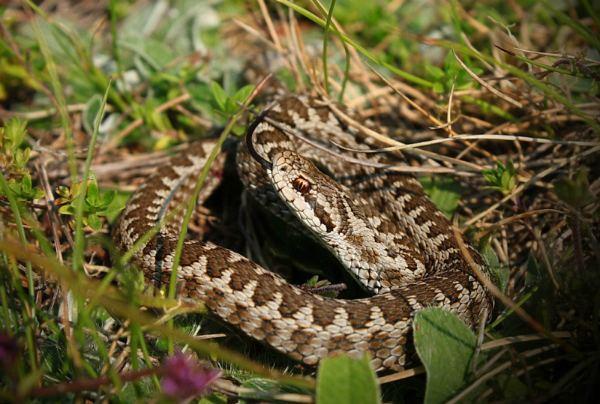 Как уберечься от укусов змей